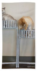 Cats In Baskets Beach Towel