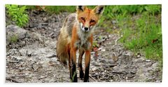 Beach Sheet featuring the photograph Cautious But Curious Red Fox Portrait by Debbie Oppermann