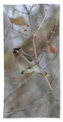 Cedar Wax Wing 2 Beach Towel by David Arment
