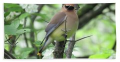 Cedar Wax Wing Beach Towel by Alison Gimpel