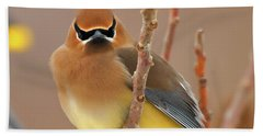 Cedar Wax Wing Beach Towel by Carl Shaw