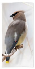 Cedar Wax Wing Beach Towel by Jim Fillpot