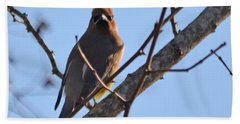 Cedar Wax Wing On The Lookout Beach Towel by Barbara Dalton