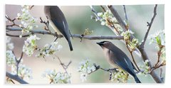 Cedar Wax Wing Pair Beach Sheet by Jim Fillpot