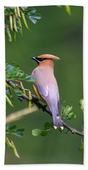 Cedar Waxwing 1 Beach Sheet