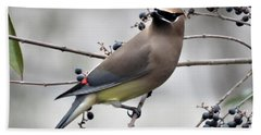 Cedar Waxwing 1 Beach Towel by Kathy Long