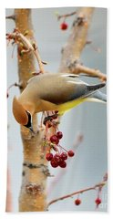Cedar Waxwing 2 Beach Towel by Betty LaRue