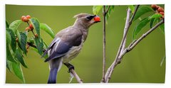 Beach Towel featuring the photograph Cedar Waxwing 2 by Gary Hall