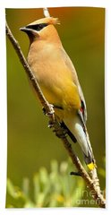 Cedar Waxwing Beach Sheet by Adam Jewell