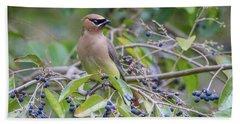 Cedar Waxwing And Berries Beach Sheet by Karen Jorstad