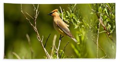 Cedar Waxwing At Glacier Beach Sheet by Adam Jewell