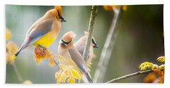 Beach Towel featuring the photograph Cedar Waxwing Beauty by Parker Cunningham