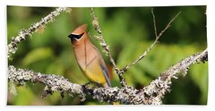 Cedar Waxwing  Beach Sheet by Carol R Montoya