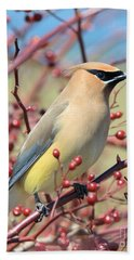 Beach Towel featuring the photograph Cedar Waxwing by Debbie Stahre