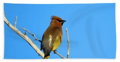 Cedar Waxwing Beach Sheet by Dianne Cowen