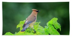 Cedar Waxwing Beach Towel by Gary Hall