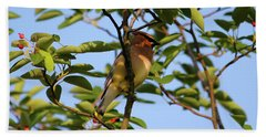 Cedar Waxwing Beach Sheet by Mark A Brown
