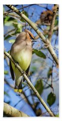 Cedar Waxwing Perch II Beach Towel by Karen Jorstad
