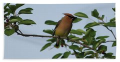 Cedar Waxwing Profile Beach Sheet by Mark A Brown