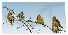 Cedar Waxwings Beach Towel