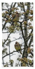 Cedar Waxwings In A Blossoming Tree Beach Sheet