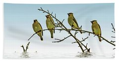Cedar Waxwings On A Branch Beach Sheet by Geraldine Scull