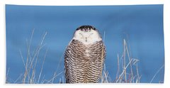 Centered Snowy Owl Beach Towel