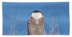 Centered Snowy Owl Beach Towel
