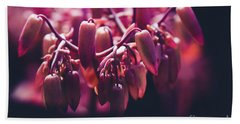 Chandelier Plant Kalanchoe - A Solitary Morning Beach Towel by Sharon Mau