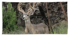 Beach Towel featuring the photograph Chasing Velvet Antlers 6 by Natalie Ortiz