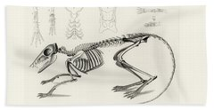 Checkered Elephant Shrew Skeleton Beach Towel