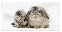 Checking For Grey Hares Beach Sheet