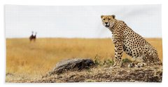 Cheetah In Africa Looking Into Camera Beach Sheet