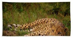 Cheetah Resting, Masai-mara Beach Towel