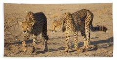 Cheetahs Beach Sheet