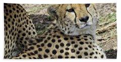 Beach Towel featuring the photograph Cheetahs Resting by Perla Copernik