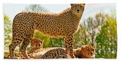 Cheetahs Three Beach Towel