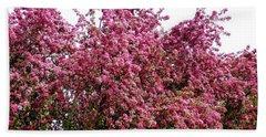 Cherry Blossoms 2 Beach Sheet by Will Borden
