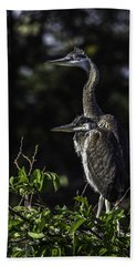 Chick Blue Heron Beach Towel