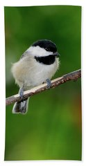 Chickadee Beach Towel by Betty LaRue