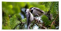 Chickadee Feeding Time Beach Sheet by Kerri Farley