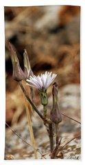 Chicory Flower Bud Closeup Beach Towel