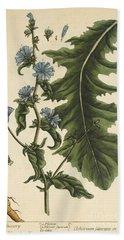 Chicory, Medicinal Plant, 1737 Beach Towel