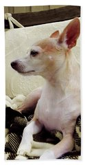 Chihuahua Chiqui Portrait 3 Beach Sheet