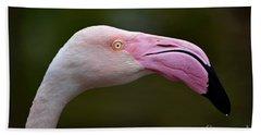 Chilean Flamingo Portrait Beach Towel