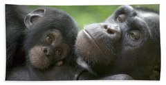 Chimpanzee Mother And Infant Beach Towel