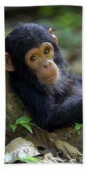 Beach Towel featuring the photograph Chimpanzee Pan Troglodytes Baby Leaning by Ingo Arndt