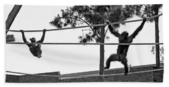 Beach Towel featuring the photograph Chimps In Black And White by Miroslava Jurcik