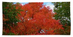 Chinese Pistache Fall Color Beach Towel