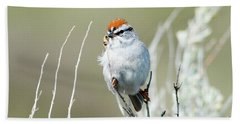 Beach Towel featuring the photograph Chipping Sparrow by Mike Dawson